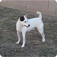 Adopt A Pet :: JOHNNY RINGO - Scottsdale, AZ