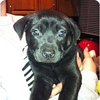 Adopt A Pet :: Raven - Orlando, FL