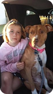 American Pit Bull Terrier Mix Dog for adoption in Sanford, North Carolina - Delilah