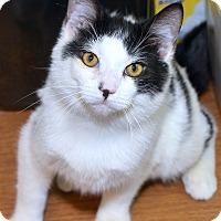 Adopt A Pet :: Poepet - Medina, OH