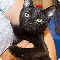 Adopt A Pet :: Licorice - Irvine, CA