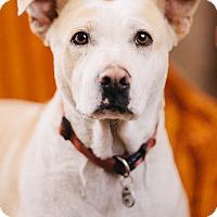Adopt A Pet :: Poe - Portland, OR