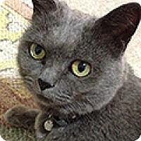Adopt A Pet :: Neffie - Durham, NC