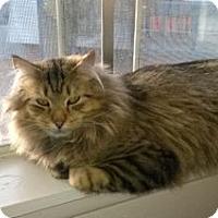 Adopt A Pet :: Paulie - Colorado Springs, CO