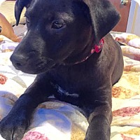 Adopt A Pet :: Lena - Baden, PA