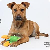 Adopt A Pet :: Bristol - Baton Rouge, LA