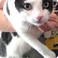 Adopt A Pet :: Spotty - Nashville, TN