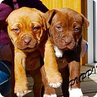 Adopt A Pet :: Roll - Daleville, AL