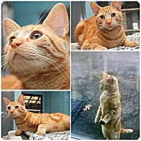 Adopt A Pet :: Seamus - Forked River, NJ