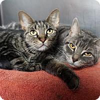 Adopt A Pet :: Susie & Gracie - Mt Vernon, NY
