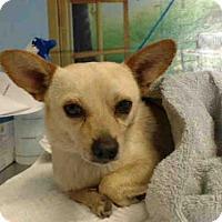 Adopt A Pet :: A493593 - San Bernardino, CA