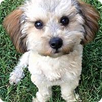 Adopt A Pet :: Rupert - Abilene, TX