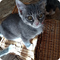Adopt A Pet :: Anabel - Colorado Springs, CO