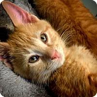 Adopt A Pet :: Erik - Island Park, NY