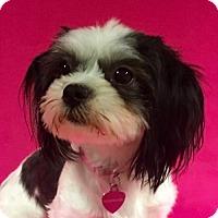 Adopt A Pet :: Bonnie - Alta Loma, CA