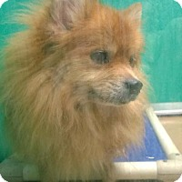 Adopt A Pet :: POOFY - Terre Haute, IN