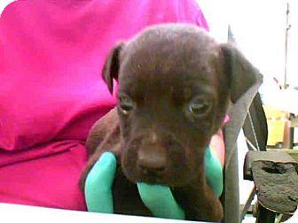 Labrador Retriever Mix Dog for adoption in Conroe, Texas - BUDDY