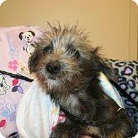 Adopt A Pet :: Figaro - Wildomar, CA