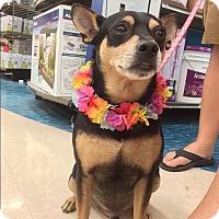 Adopt A Pet :: Max - Waipahu, HI