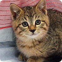 Adopt A Pet :: Cupid - Greenfield, IN