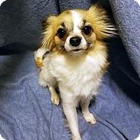 Adopt A Pet :: Nessie - Detroit, MI
