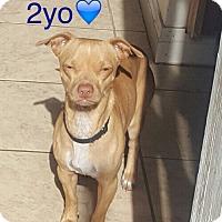 Adopt A Pet :: Norman - Los Angeles, CA