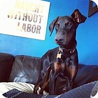 Adopt A Pet :: Amos - Springfield, MO