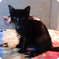 Adopt A Pet :: Mary - N. Billerica, MA