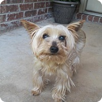 Adopt A Pet :: Chicas - Brattleboro, VT