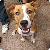 Adopt A Pet :: Velma - Ogden, UT