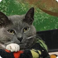 Adopt A Pet :: Fanny - Elyria, OH