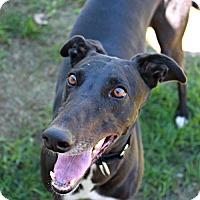 Adopt A Pet :: Cora - Randleman, NC