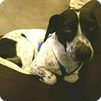 Adopt A Pet :: Rocky - Long Beach, CA