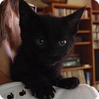 Adopt A Pet :: Gloria - Knoxville, TN