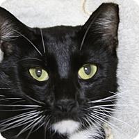 Adopt A Pet :: Tuxie - Sarasota, FL
