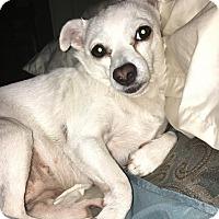 Adopt A Pet :: Pita - San Antonio, TX
