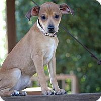 Adopt A Pet :: Ronnie - Pinehurst, NC