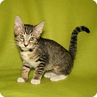 Adopt A Pet :: Morgan - Bradenton, FL