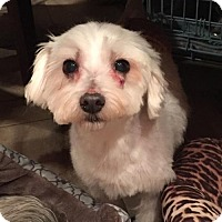 Adopt A Pet :: Nosie - N. Babylon, NY