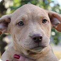 Adopt A Pet :: Sara - East Dover, VT