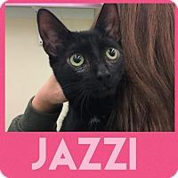 Adopt A Pet :: Jazzi - Westbury, NY