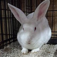 Adopt A Pet :: Cypress - Williston, FL