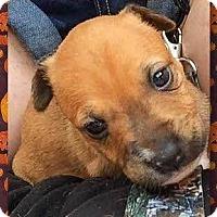 Adopt A Pet :: Joy - Coldwater, MI