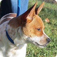 Adopt A Pet :: Smiley - Germantown, MD