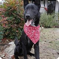 Adopt A Pet :: Axel - Tyler, TX