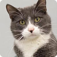 Adopt A Pet :: MISTER BLUE - Pt. Richmond, CA