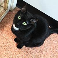 Adopt A Pet :: Sammie - Fremont, OH