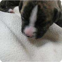 Adopt A Pet :: Halas - Antioch, IL