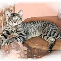 Adopt A Pet :: Dorsey - Montgomery, IL