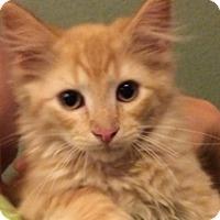 Adopt A Pet :: Tigger - Edmond, OK